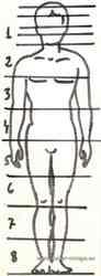 Proporciones del cuerpo en pie.